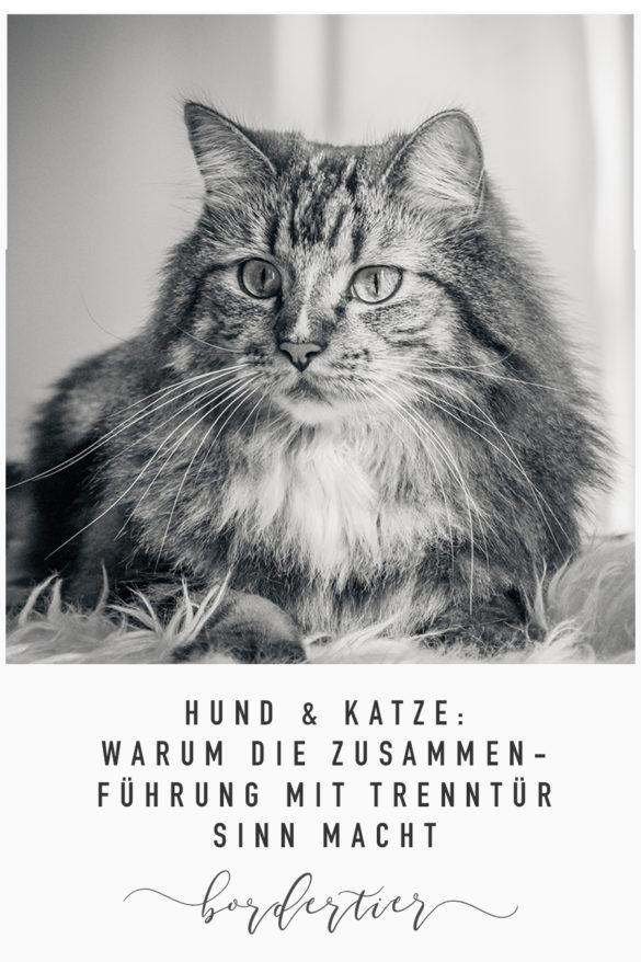 Hund & Katze: Warum die Zusammenführung mit Trenntür Sinn macht
