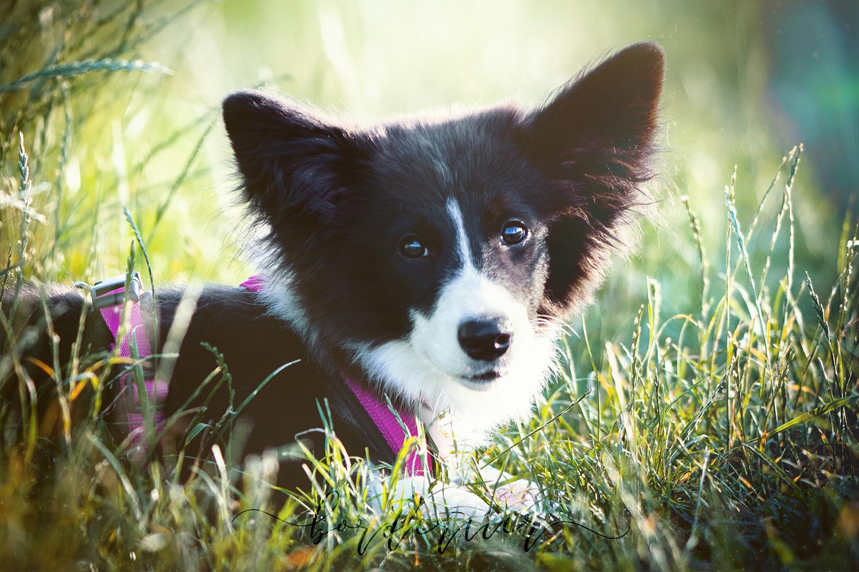 hundeblog