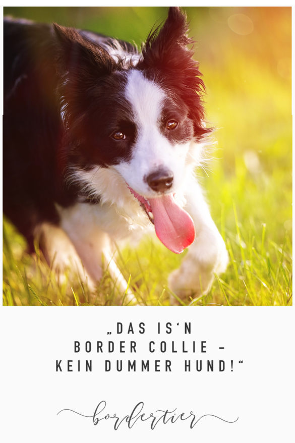 """Das is'n Border Collie – Kein dummer Hund!"""